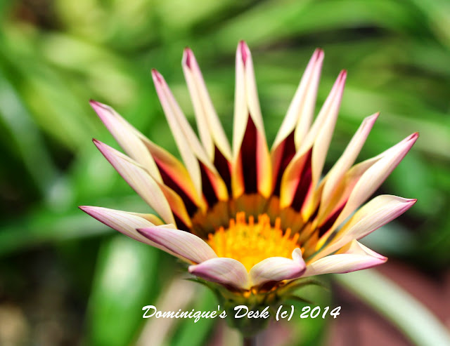 A bloom captured by R on my DSLR