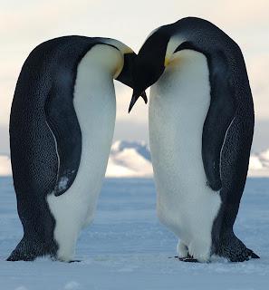 La bise des pingouins en entreprise