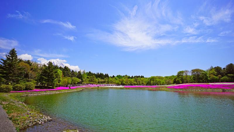 富士芝桜まつり 写真9