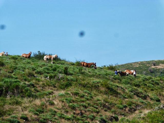 Fête du Haflinger les 16 et 17 aout 2013 a Ajoux (07) P1170012%2520%25281024x768%2529