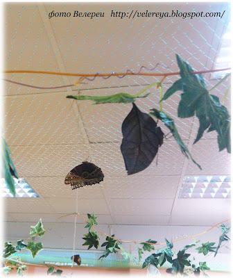 Тропические бабочки прилетели в Гомель