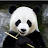 Li Colin avatar image