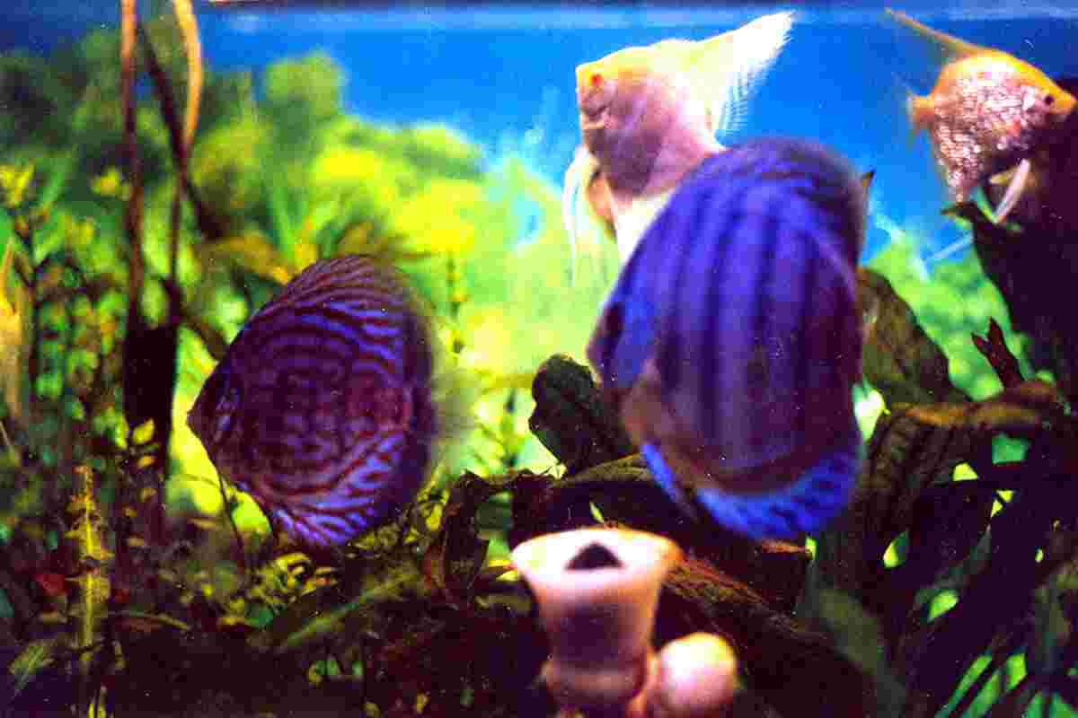 Freshwater fish behavior - Several Studies Have Shown From Time To Time One Important Fact About Fish Keeping People Who Have A Tropical Fish Aquarium At Their Home Are Cool In The
