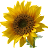 Tran Ann avatar image