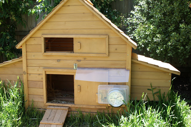 Chicken coop purchased from Pets Station