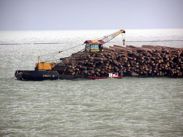 Hasil Ilegal Logging atau Legal Logging?
