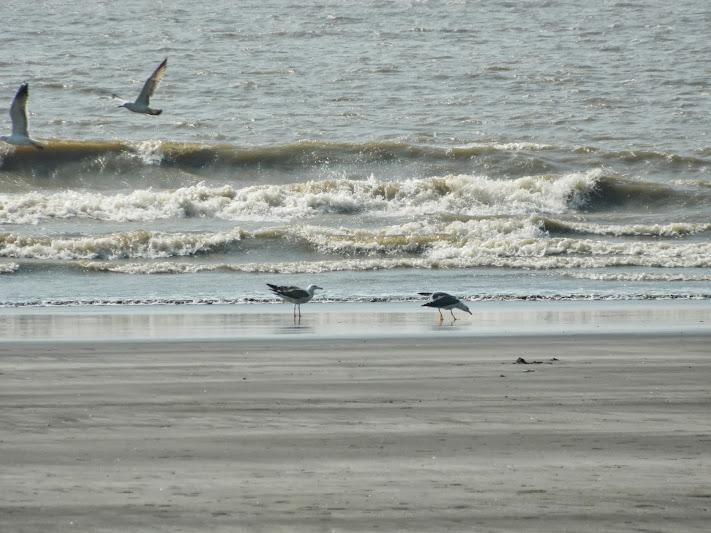 Sea gulls on arnala beach