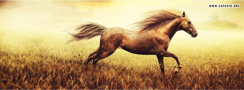 Capas para Facebook Cavalo