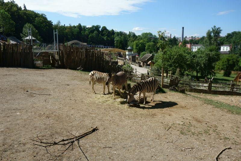 Путешествия: Поход в Йиглавский зоопарк (Чехия).