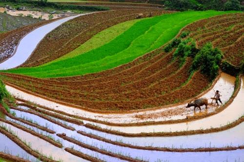 ruong bac thang tuyet dep mua nuoc do 0 001 Nên đi du lịch Hà Giang vào mùa nào?