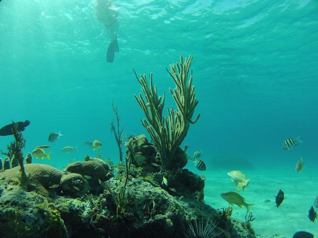 https://lh5.googleusercontent.com/-VeqO_m1yJd8/ULVbYH_zwwI/AAAAAAAADB4/m0DoIGofbNo/s640/20121111_MariaLaGorda_Snorkeling_0025.jpg
