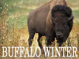 buffalowinter