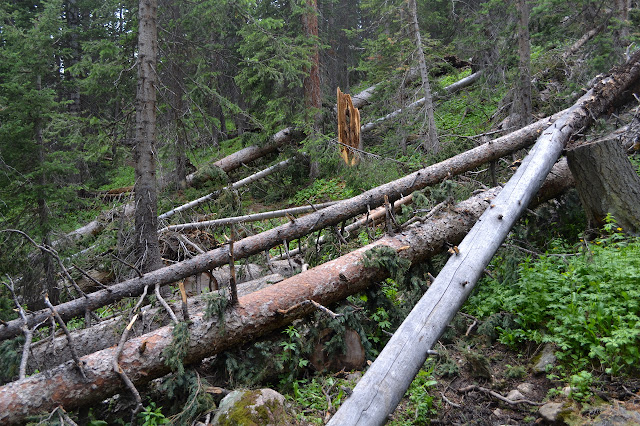 many trees across the trail