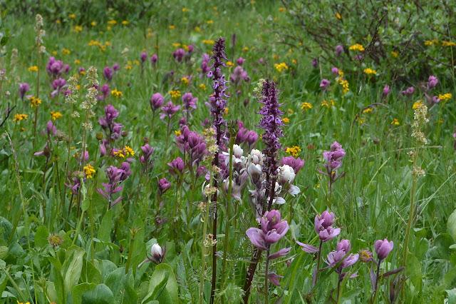 purple flowers with more purple flowers