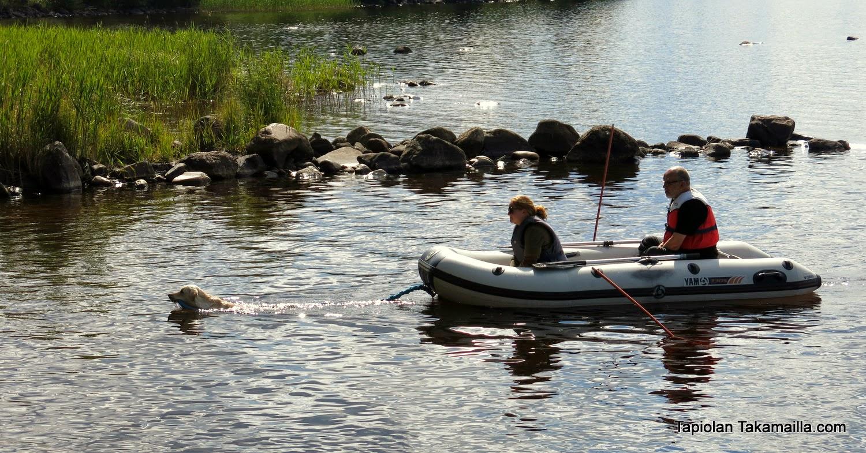 labradorinnoutaja vetää veneen rantaan