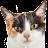 Maurice the Cat avatar image