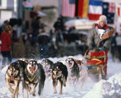 Inside Look at the Sport of Dog Sledding