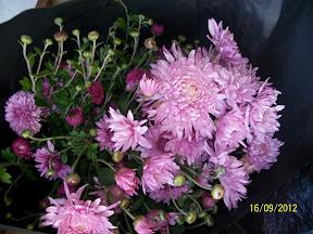 Хризантемы - королевы осени - Страница 2 100_2722