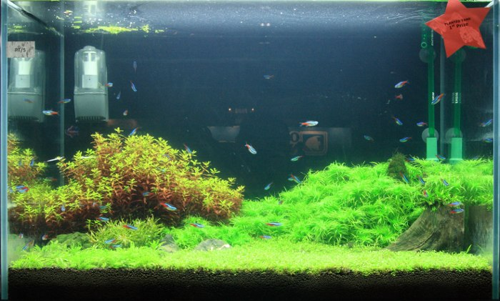 Singapore Aquarama 2011 planted tank competition result AquaScaping ...