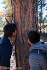 Smelling the Ponderosa Pine trees on the Paseo del Lobo Section 55 (Photo by N. Renn)
