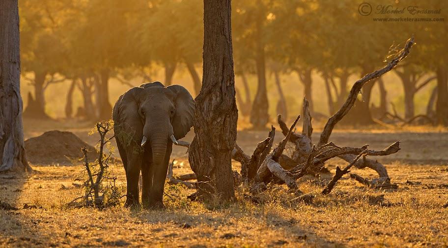 elephant_dawn_2_ManaPools_2012.jpg