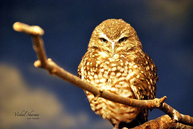 owl in Superb Examples of Animal Photography
