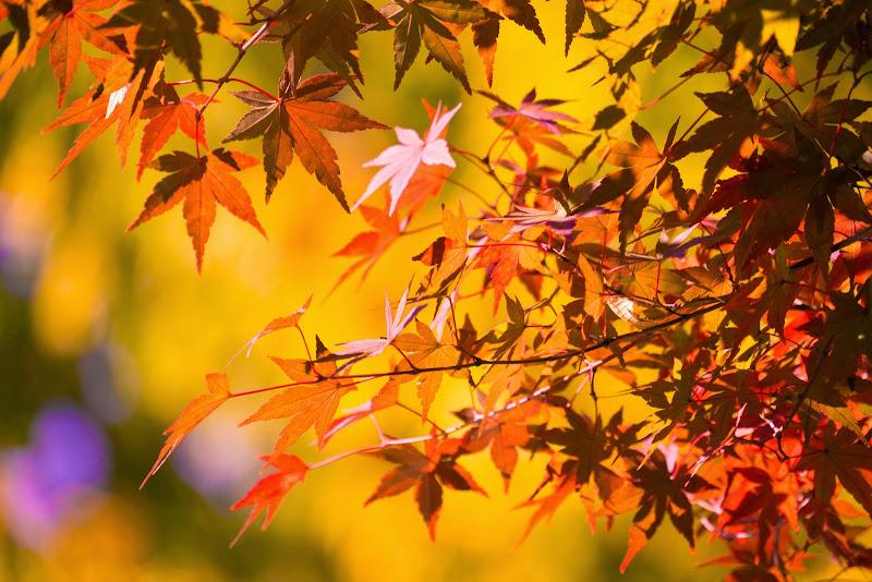 府中の森公園 紅葉 写真4