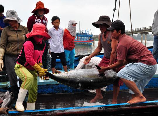Hiện tất cả các loài cá chỉ còn giá một nửa so với bình thường. Trong ảnh cá ngừ đại dương được ngư dân khai thác ở vùng biển Trường Sa trở về.
