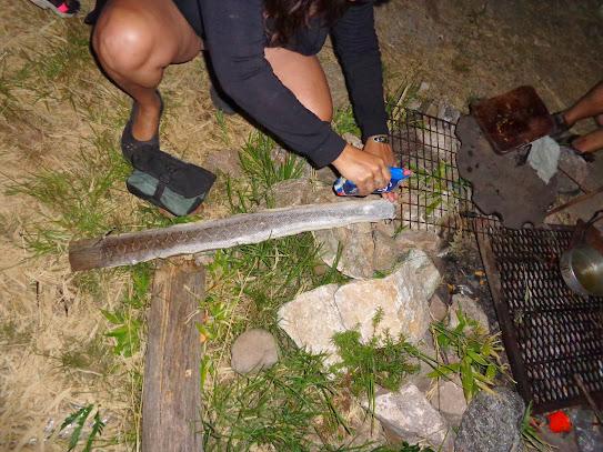 Reptil: Estás muy abajo en nuestra cadena alimenticia!!! DSC01457