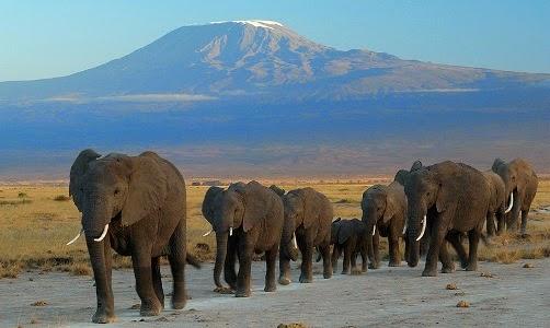 Parque Nacional de Amboseli - Férias no Quénia