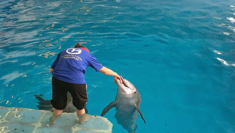 IMAG6356 A Dolphin Tale 2 Experience at Clearwater Marine Aquarium: #WinterHasHope