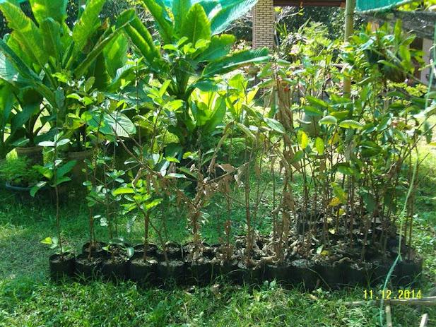 ชมสวนชิมฝรั่ง