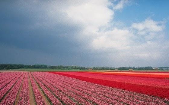 Férias na Holanda