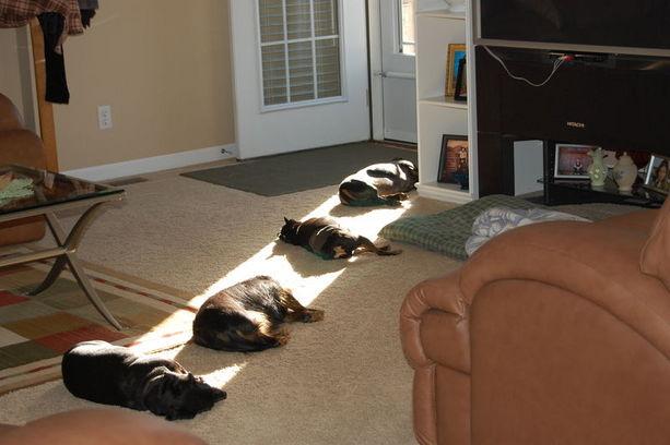 Cães aproveitando uma réstia de sol.