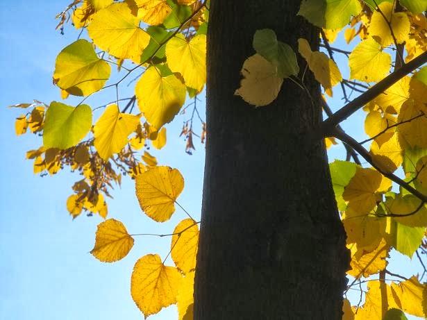 Осень стихи картинки