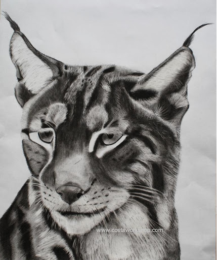 Lynx origineel licht. w.JPG