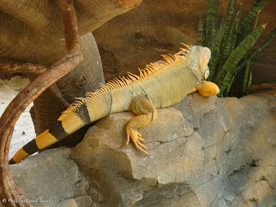 Sunway Lagoon - Wildlife Park Batch 4 Photo 6