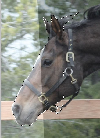 Cabeça do cavalo já selecionada