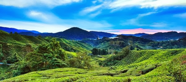 RT Cameron Highlands