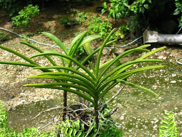Из зимы в лето. Филиппины 2011 - Страница 5 IMG_0066%252520%2525283%252529