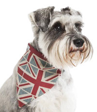 Designer Dog Neckerchiefs Luxury Bandanas For Dogs