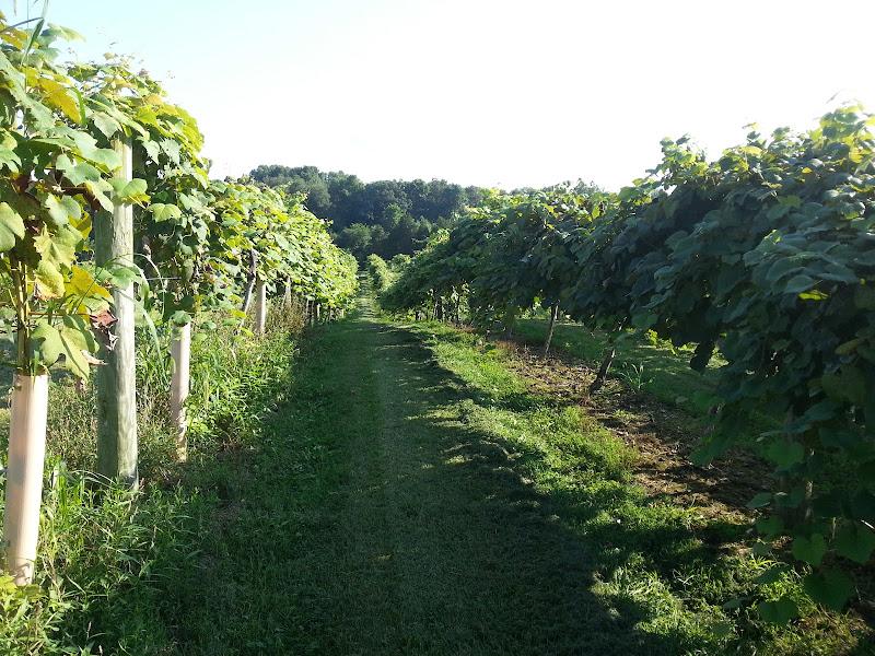 & Ertel Cellars Winery Inc