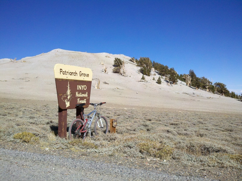 White Mountain Peak • Patriarch Grove
