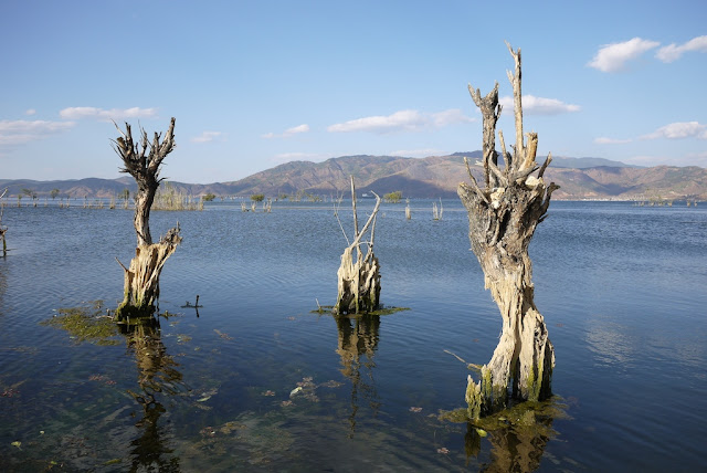 three dead trees in Erhai Lake
