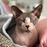 Foto del profilo di Zuleika