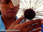 Nok Nok showing a sea ​​urchin