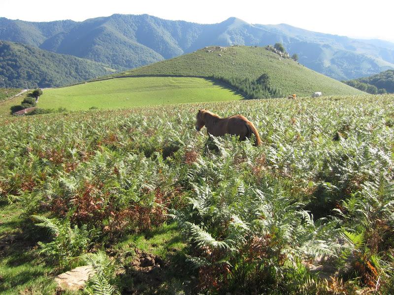 paysage typique du pays basque