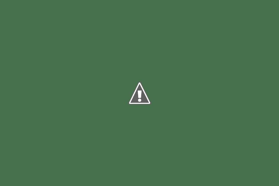 Little Tree Garden_Flower