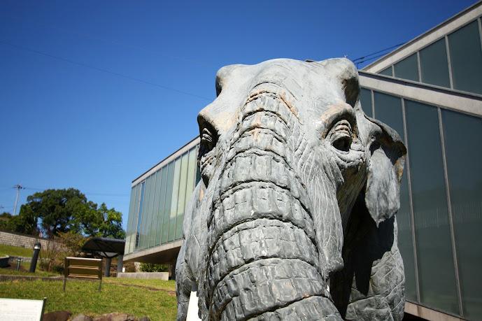 壱岐文化ホールにいるナウマン象