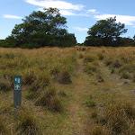 Arrow marker through grass land (104497)